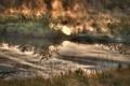 Картинка осень, природа, туман, озеро, кусты