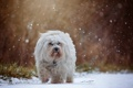 Картинка осень, снег, собака