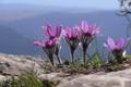 Картинка цветы, природа, macro