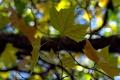 Картинка осень, макро, ветки, листва