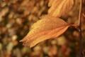 Картинка осень, листья, вода, капли, макро, природа, фон