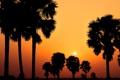 Картинка небо, деревья, природа, фото, пейзажи, вид, вечер