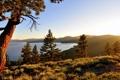 Картинка деревья, горы, утро