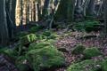Картинка лес, листья, деревья, природа, корни, камни, nature