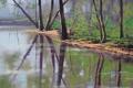 Картинка лес, река, рисунок, арт, artsaus, riverside trees