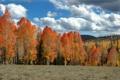 Картинка поле, осень, небо, деревья, холмы