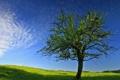 Картинка весна, небо, дерево