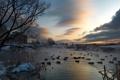 Картинка city, river, evening, mood, ducks, decline, mytischi