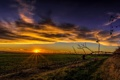 Картинка поле, небо, облака, закат, лучи солнца