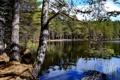 Картинка вода, деревья, природа, озеро, фото, Финляндия, Lapland
