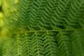 Картинка лес, лето, макро, папортник