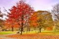 Картинка осень, небо, деревья, парк, дорожка, скамья