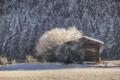 Картинка лес, деревья, природа, зима, хижина, снег, утро