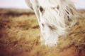 Картинка трава, природа, конь