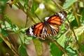 Картинка листья, ветки, бабочка