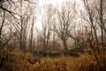 Картинка лес, природа, пруд, камыш