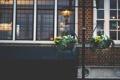 Картинка горшки, здание, дом, растения, цветы