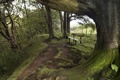 Картинка дорога, деревья, природа, скамья