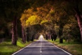 Картинка дорога, лес, деревья, природа, Португалия