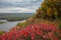 Картинка осень, лес, небо, листья, деревья, тучи, река