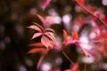 Картинка листья, макро, красный, фон, widescreen, обои, размытие