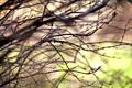 Картинка весна, размытость, Ветки, листочки