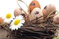 Картинка фото, Ромашки, Пасха, Яйца, Корзинка, Праздники, Гнездо