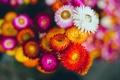 Картинка белый, красный, Цветок, flower