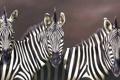 Картинка животные, взгляд, полоски, арт, морды, зебры, Robina Yasmin