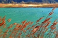 Картинка осень, вода, птицы, озеро, река, растение