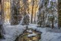 Картинка зима, лес, снег, деревья, ручей