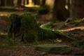 Картинка лес, трава, ветки, мох, пень