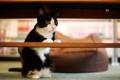 Картинка кот, дом, черно-белый, внимание, перекладина