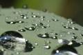 Картинка вода, капли, после дождя, macro