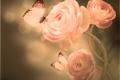 Картинка цветение, бутоны, бабочки, лепестки, азиатский лютик