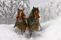 Картинка Зима, Лес, Повозка, Кони