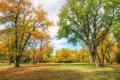 Картинка осень, небо, трава, листья, деревья, парк, люди