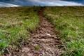 Картинка трава, макро, природа, земля