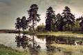 Картинка вода, деревья, болото, тина, сосны