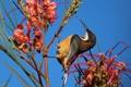 Картинка цветок, небо, птица, растение, клюв