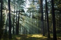 Картинка light, forest, trees