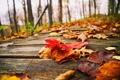 Картинка дорога, осень, лес, листья, деревья, природа, парк
