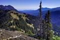 Картинка лес, горы, склон, небо