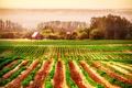 Картинка трава, земля, дымка, деревья, дома