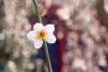 Картинка цветы, природа, нежность, красота, весна, лепестки, white