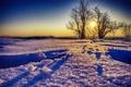Картинка снег, деревья, пейзаж, закат