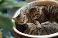 Картинка зелень, кошки, коты, фокус, размытость, спят