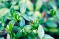 Картинка зелень, листья, макро, природа, фон, обои, божья коровка