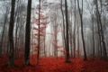 Картинка лес, осень, листва, туман