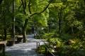 Картинка лавочки, дорожка, парк, деревья, прогулка